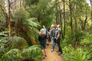 West Coast Beaches & Rainforest Guided Tour