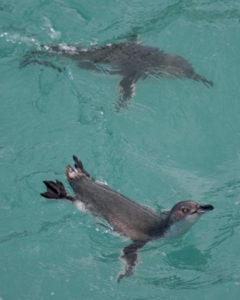 Penguin Colony Tour at Dusk