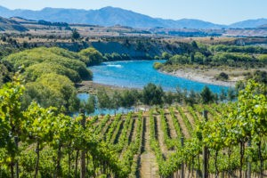 Small Exclusive Winery Tour and Gourmet Lunch