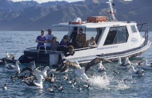 Encounter Wild Albatross on the Ocean
