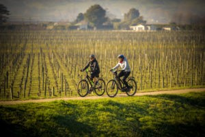 Coastal Cycle Tour to Popular Wineries