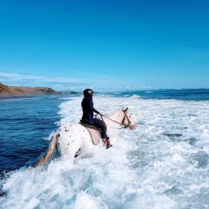 Maybe the Best Horse Trek in New Zealand?