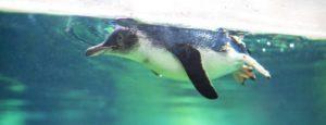 VIP Exclusive Penguin Habitat Access